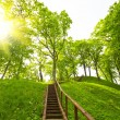 Stock Photo: Ladder to hill, summer