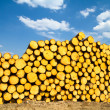 Stock Photo: Sawn timber