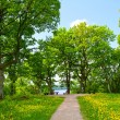 Summer park, trees — Stock Photo