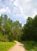 Trail in the summer park — Stock Photo