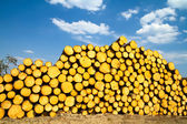 Sawn timber — Stock Photo