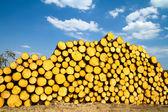Sawn timber — Stock Photo
