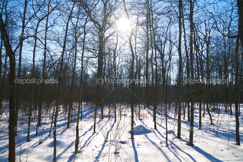 Winter forest, the sun — Stock Photo #6255714