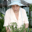 Royalty-Free Stock Photo: The old woman in a hothouse at bushes