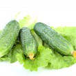 Green cucumbers on salad leaves isolated — Stock Photo #6380077