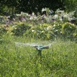 Grass Sprinkler — Stock Photo #5378329