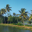 Kerala backwaters — Stock Photo