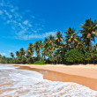 Idyllic beach. Sri Lanka — Stock Photo #5946933