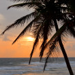 Tropical sunset scene with palms - Stock Photo