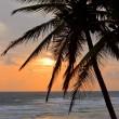 avuç içi ile tropikal günbatımı manzara — Stok fotoğraf