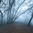 Misty scary forest  in fog - Stock Photo