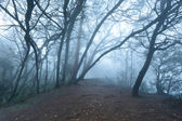 Misty scary forest in fog — Stock Photo