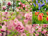 Spring flowers — Stock Photo