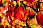 Autumn seasonal wallpaper — Stock Photo