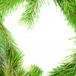 Royalty-Free Stock Photo: Frame from the pine branches