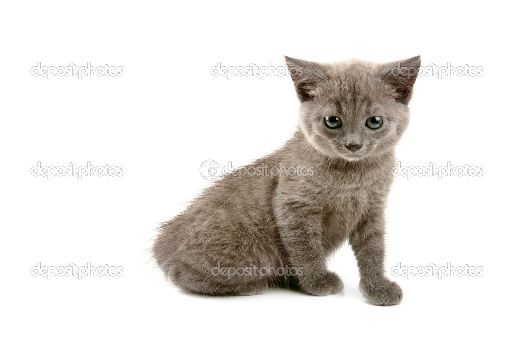 Cute little grey kitten isolated on white background — Stock Photo #6638446