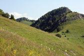 Sopé do cáucaso norte — Fotografia Stock