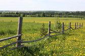Venkovské krajině — Stock fotografie