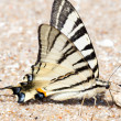 Stock Photo: Butterfly on sand ashore