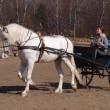 Cart with a white horse — Stock Photo