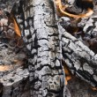 Stock Photo: Firewood ashes
