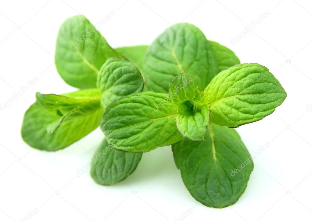 Fresh and sweet mint close up — Stock Photo #5495873