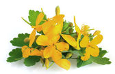 Celandine flowers — Stock Photo