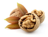 Walnu twith leaf — Stock Photo