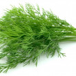Young dill close up - Stock Photo