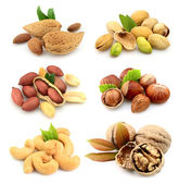 Collection of nuts — Stock Photo