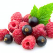 Royalty-Free Stock Photo: Raspberries and black current