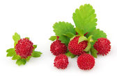 Wood wild strawberry — Stock Photo