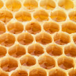 Honeycomb — Stockfoto #6516184