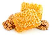 Honey honeycombs with a walnut — Stock Photo