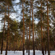 Winter lanscape with pine forest — Stock Photo #5429231