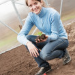 Woman resetting  strawberry sprouts — Stock Photo