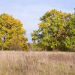 September landscape with trees - Stock Photo