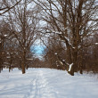 Oak forest in winter — Stock Photo