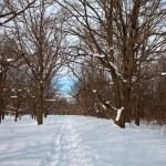 Oak forest in winter — Stock Photo