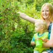 Children is picking gooseberry — Stock Photo