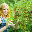 Girl picking gooseberry in field — Stock Photo #5436117
