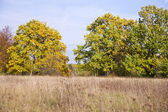 September landscape with trees — Stockfoto