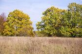 September landscape with trees — ストック写真