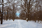 Oak forest in winter — Stockfoto