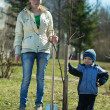 Mother and son  planting  tree — Stock Photo #5712018