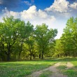 Oak grove in august — Stock Photo