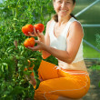 Smiling woman picking tomato — Stock Photo