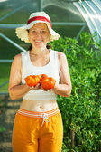 Woman is picking tomato — Stock Photo