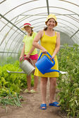 Two women watering vegetables — Stock Photo