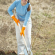 Stock Photo: Mature gardener planting sprouts